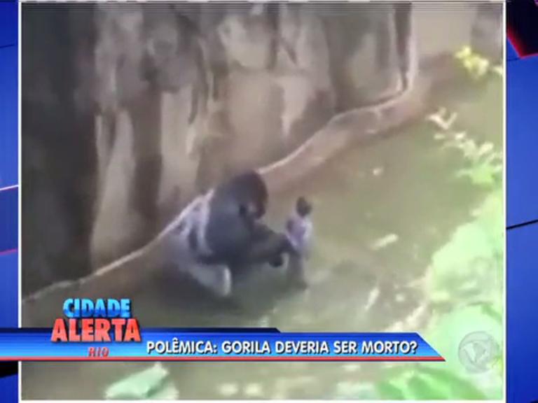 Execução de gorila nos Estados Unidos divide opiniões de cariocas ...