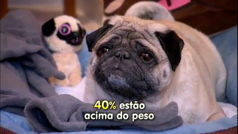 Estudos mostram que 40% dos cães e gatos estão acima do peso ...