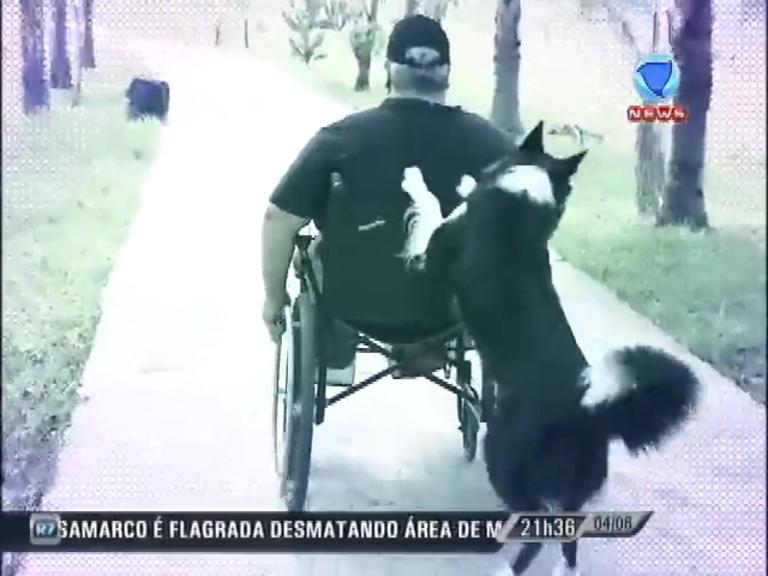 Zapping: cãozinho ajuda o dono cadeirante com as tarefas do dia-a ...