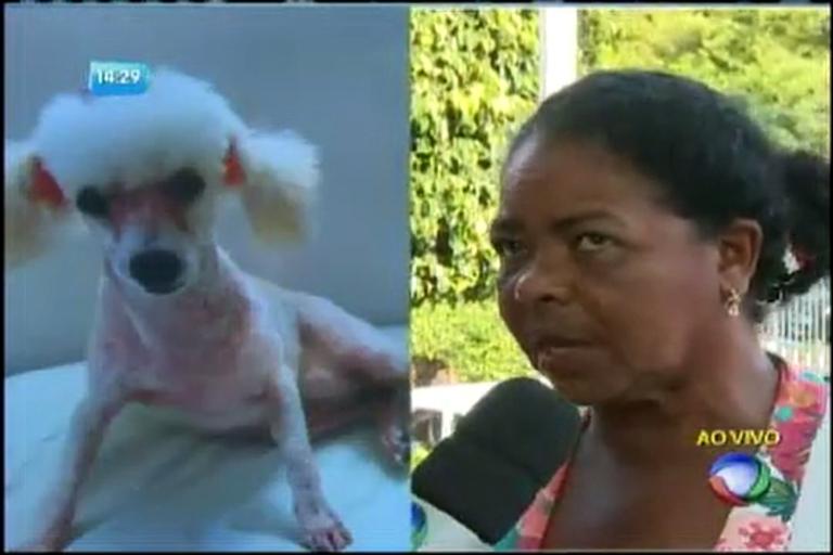 Elizete procura a cadelinha de estimação - Notícias - R7 Bahia