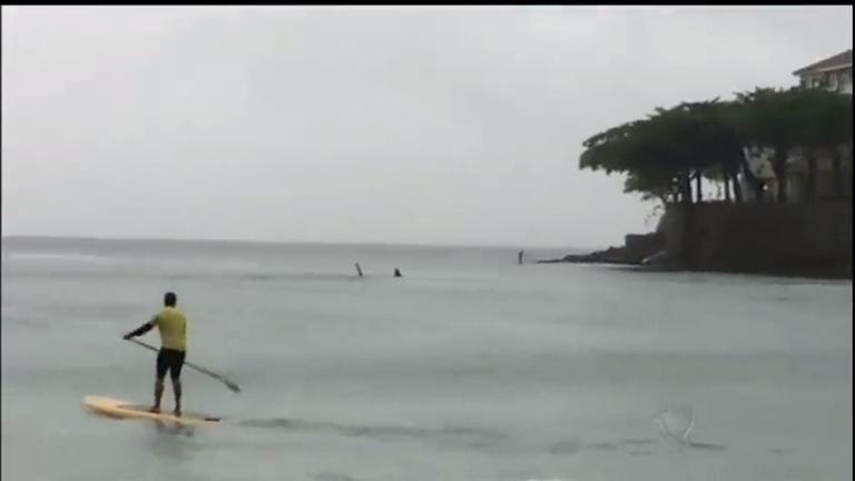 Tubarão-baleia chama atenção na praia de Copacabana (RJ ...