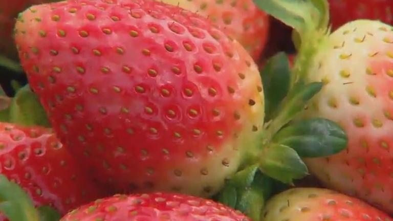 Fruta da paixão: descubra os mitos e verdades sobre o morango no ...