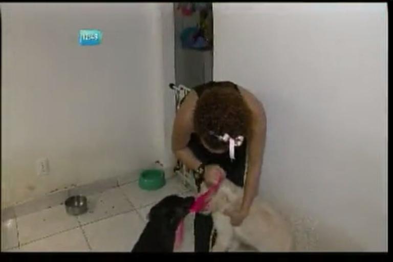 Cadela que teve os olhos arrancados se recupera bem - Bahia - R7 ...