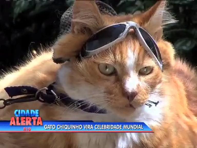 Gato conhecido das orlas cariocas vira notícia internacional - Rio de ...