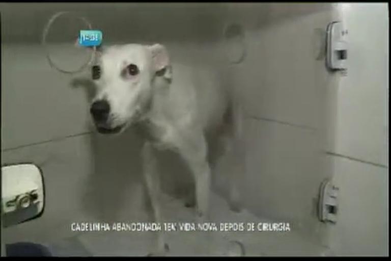 Cadelinha abandonada tem vida nova depois de cirurgia
