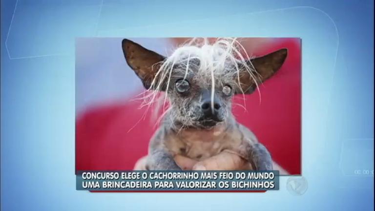 Cachorro Cego é Eleito O Mais Feio Do Mundo Em Concurso