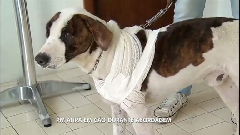 Policial atira em cachorro ao abordar adolescentes em Varginha…