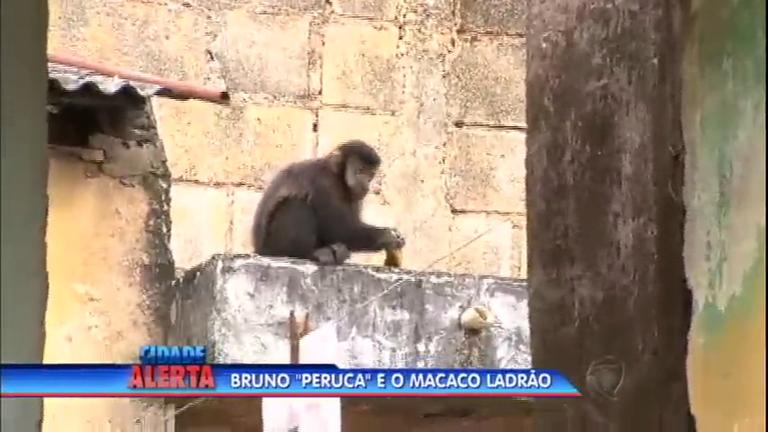 Criminoso 'animal' invade casas e preocupa moradores de Santo ...