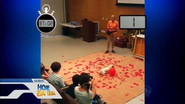 Cãozinho entra para o Guinness Book depois de estourar 100 ...