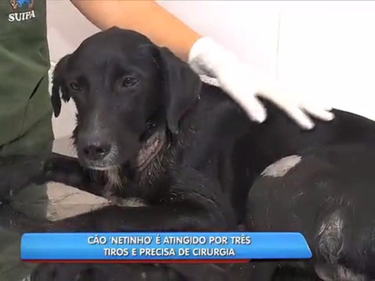 Cão atingido por disparos fratura do fêmur - Notícias - R7 Rio de ...