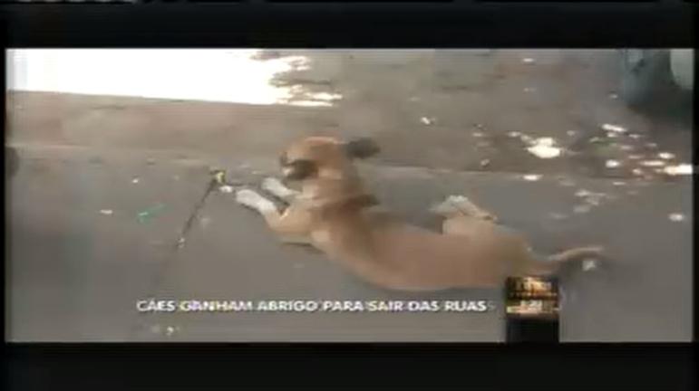 Canil vai abrigar cães de rua em Patos de Minas