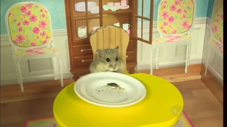 Bichos Curiosos: conheça o hamster que vive em uma luxuosa…