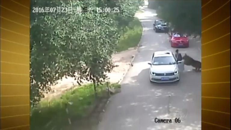 Tigre ataca mulher em safári na China - Notícias - R7 Fala Brasil