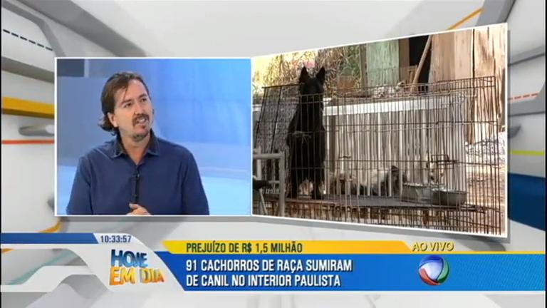 91 cachorros são roubados de canil em Itupeva (SP ...