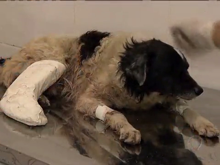 Cachorros viram vítimas de bala perdida - Rio de Janeiro - R7 ...