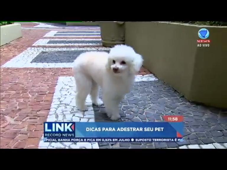Luiza Cervenka dá dicas para adestrar animais de estimação no ...