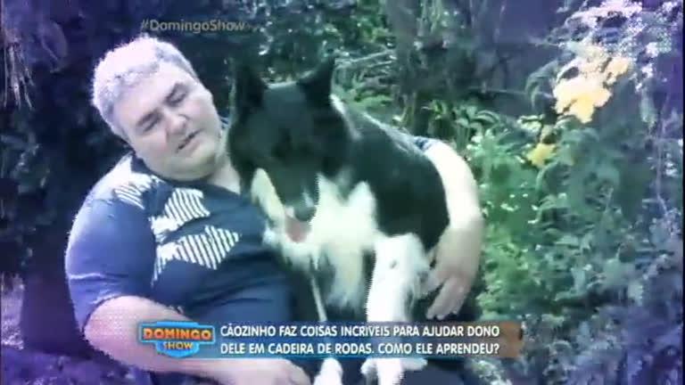 Amor incondicional: cão de estimação faz de tudo para ajudar o ...