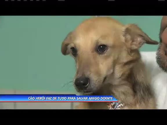 Cão herói faz de tudo para salvar amigo doente