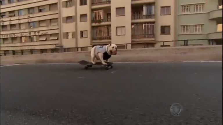 Fenômeno na internet, bulldog skatista mostra que é fera no esporte