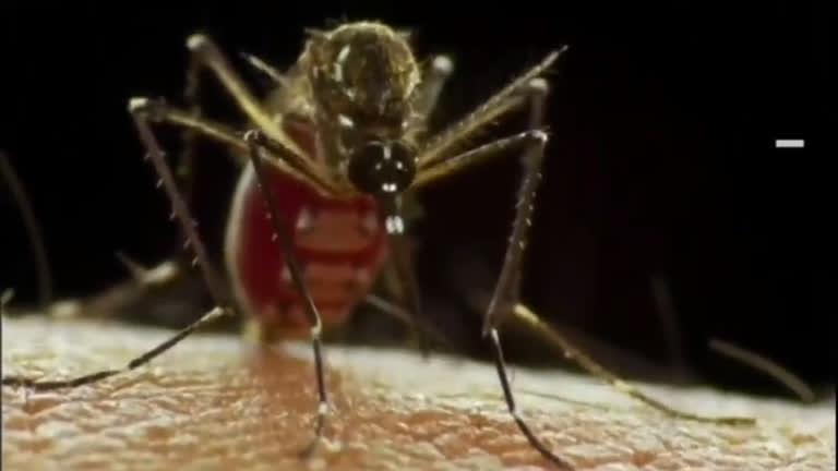 OMS informa que não houve relatos de contaminação pelo Zika ...