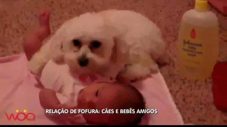 Especialistas alertam para cuidados de bebês com cachorros ...