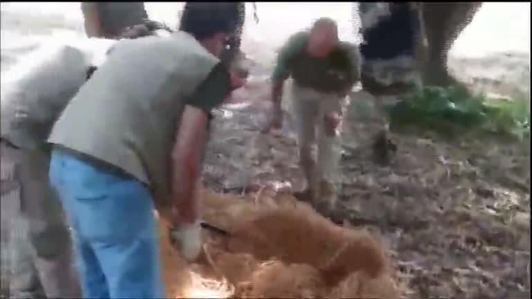 Puma é resgatado em casa de Brasília (DF) - Notícias - R7 Fala Brasil