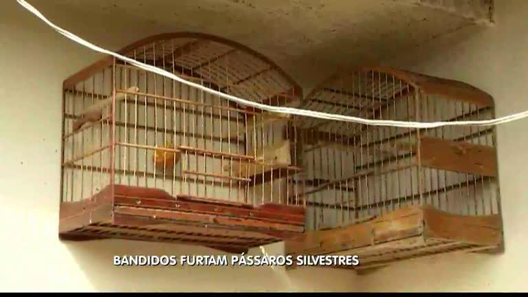 Ladrões roubam quase R$ 5 mil em pássaros - Minas Gerais - R7 ...