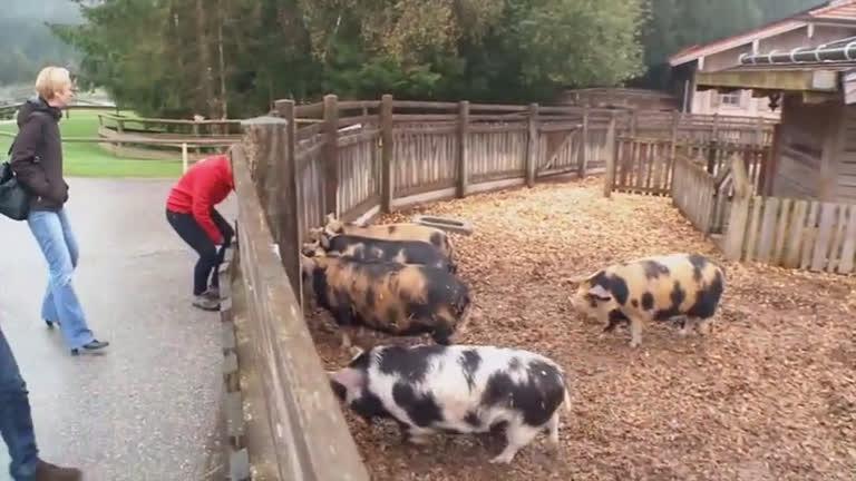 Domingo Espetacular: conheça o grupo que salva animais que ...