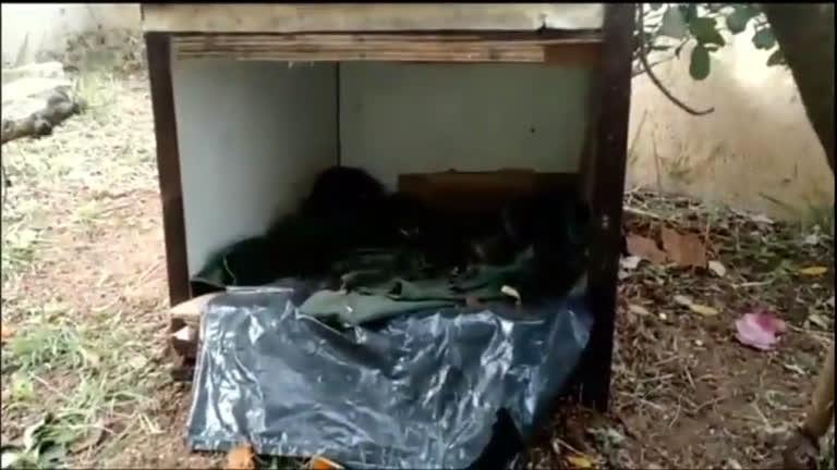 Mistério envolve a morte de gatos em um condomínio na Barra da ...