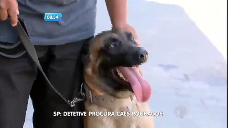 Detetives usam cães farejadores para encontrar cachorros roubados