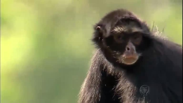 Animais idosos recebem tratamento especial no zoológico de São ...