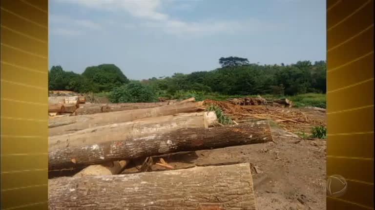 Pará lidera ranking de desmatamento na Amazônia