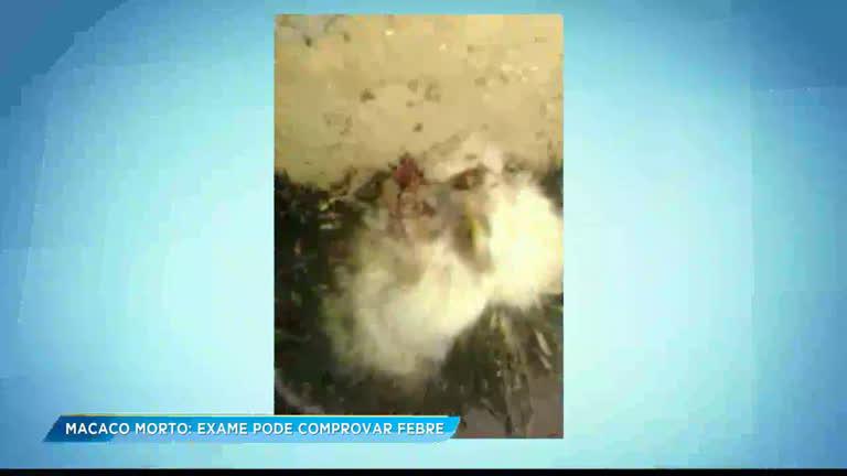 Governo vai investigar se morte de macaco tem relação com febre amarela em Minas Gerais