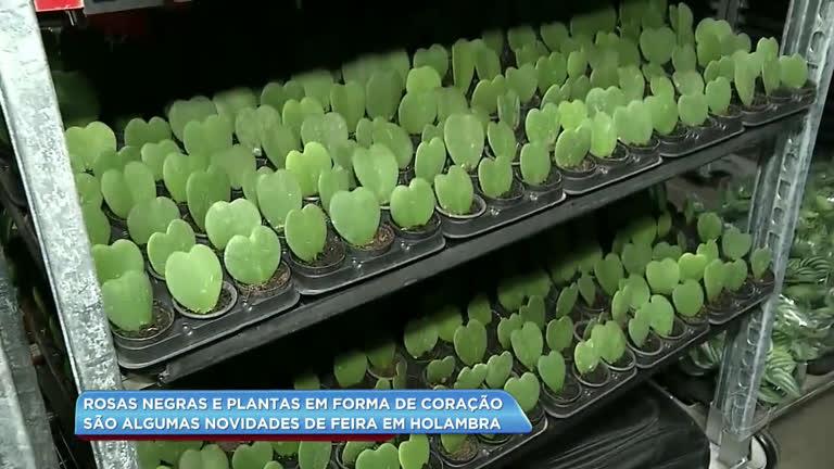 Rosa negra e plantas em formato de coração: veja as novidades…