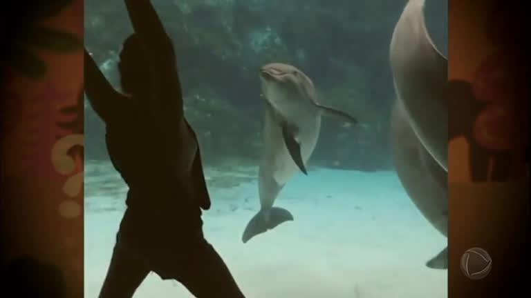 De cachorro enceradeira a golfinho risonho: veja os destaques…