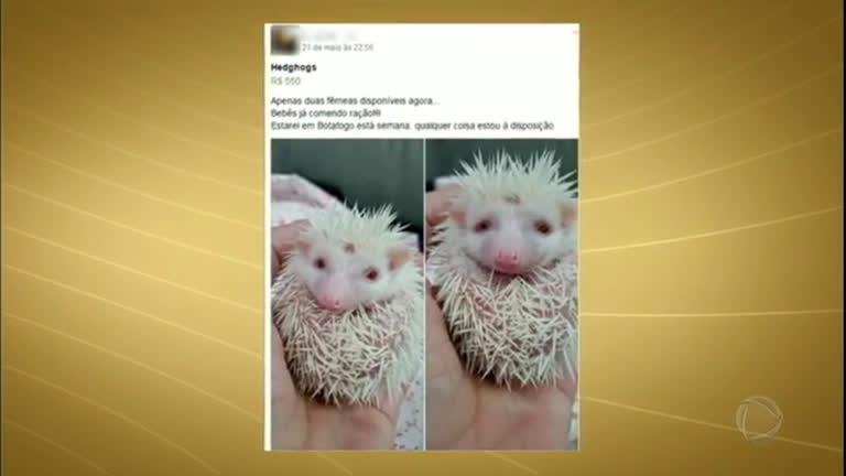 Grupos da internet fazem sucesso com venda de animais exóticos