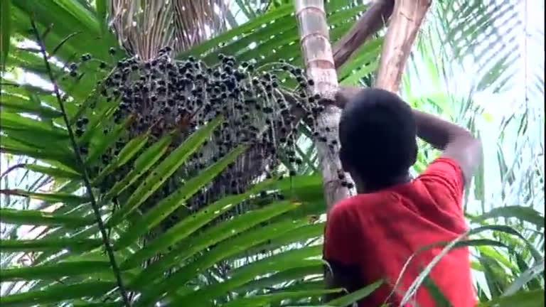 Série JR: veja a realidade dos ribeirinhos que vivem próximo ao Tumucumaque