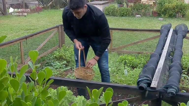 Netto acorda cedo e enfrenta frio para cuidar da horta da sede - R7