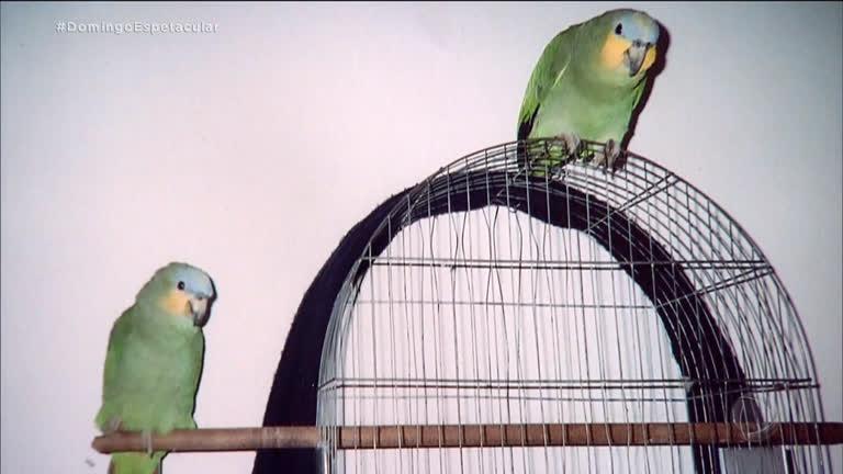 Após apreensão, aposentada busca papagaios perdidos - R7