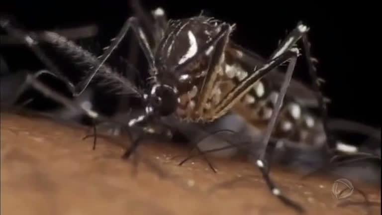 Saiba como se livrar de uma vez do mosquito Aedes aegypti