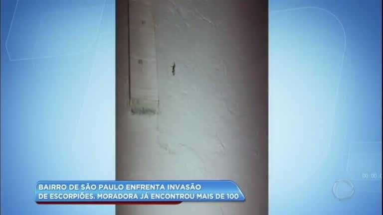 Moradora encontra mais de 100 escorpiões em bairro de SP