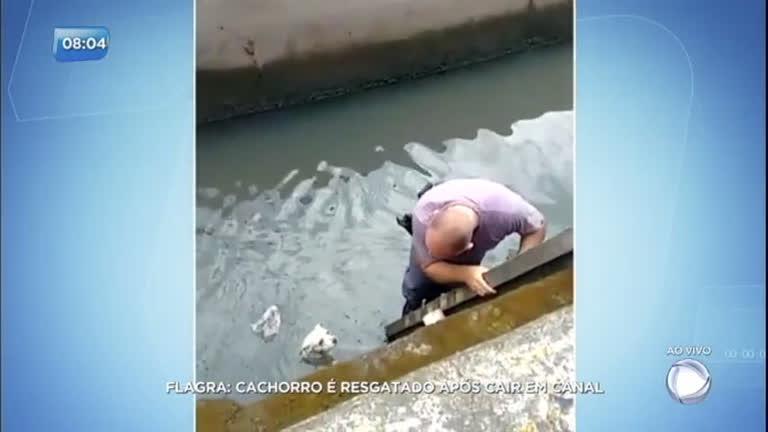 Cachorro é resgatado por policial após cair em córrego no litoral de SP