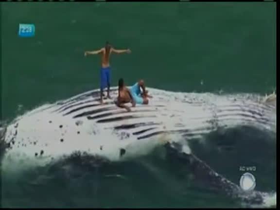 Banhistas sobem em baleia jubarte encontrada morta em Salvador - Bahia - R7  Balanço Geral BA 80bb236263322