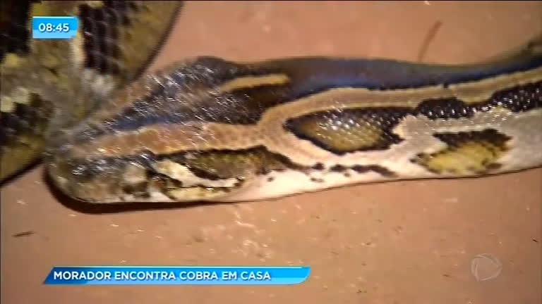 Morador é surpreendido por uma cobra em casa