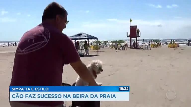 Simpatia e estilo: cão faz sucesso na beira da praia
