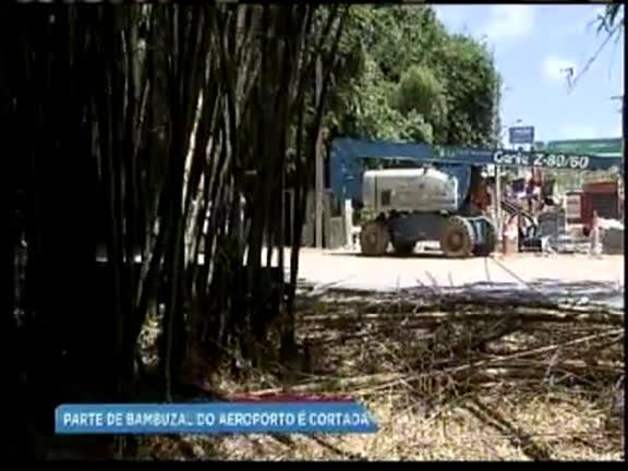 Metrô é notificado por desmatamento de bambuzal